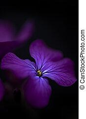 fiore, chiave, immagine, dollaro, tramortire, nero, basso,...