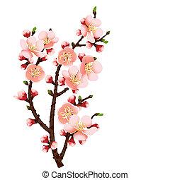 fiore, ciliegia, astratto, ramo, fondo