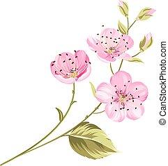 fiore ciliegia, fiori, con, leaves.