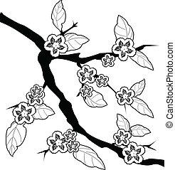 fiore ciliegia, flower.