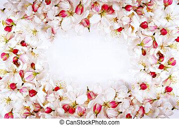 fiore ciliegia, petali, cornice