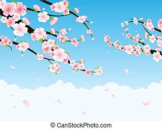 fiore, ciliegia, ramo