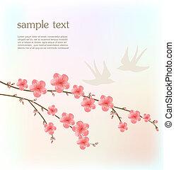 fiore ciliegia, scheda