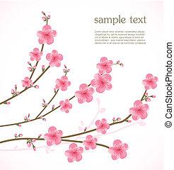 fiore, ciliegia, scheda