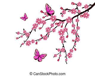 fiore, ciliegia