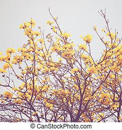fiore, cima, albero, effetto, filtro giallo, retro