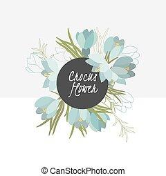 fiore, delicato, croco, illustrazione