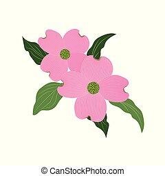 fiore dentellare, natura, cornus, florida, dogwood
