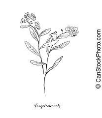 fiore, dimenticare, primavera, disegno, contorno, mazzo,...