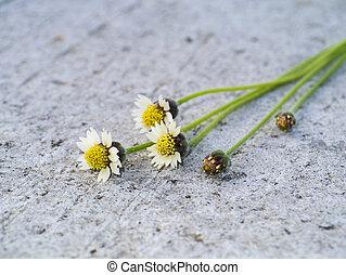 fiore, erba, su, il, road.
