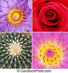 fiore, fondo
