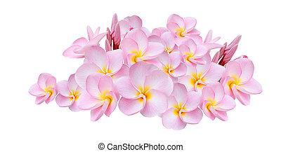 fiore, fondo, rosa, bianco