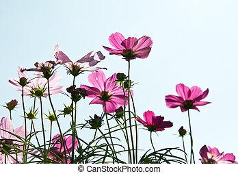 fiore, giardino
