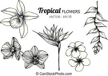 fiore, illustration., collezione, tropicale, set, disegno