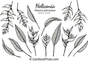 fiore, illustration., heliconia, foglie, collezione, set, disegno