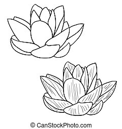 fiore, illustration., loto, -, vettore, orientale