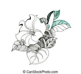 fiore, isolato, mano, fondo, disegnato, bianco