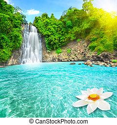 fiore loto, in, cascata, stagno