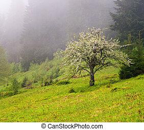 fiore, montagne, albero, mela