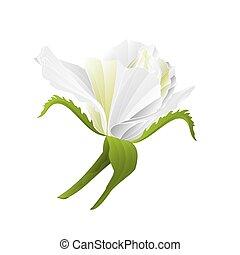 fiore, natura, rosa, vector.eps, fondo, vendemmia, bianco, germoglio