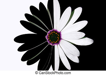 fiore, nero bianco