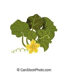 fiore, organico, illustration., concept., cibo., patisson, vettore
