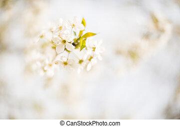 fiore, primavera, albero