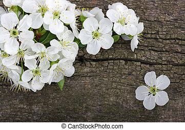 fiore primaverile, su, legno, fondo