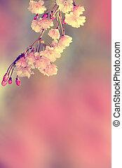 fiore primaverile, vendemmia