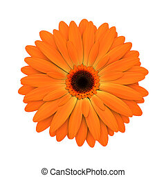 fiore, render, -, isolato, margherita, arancia, bianco, 3d