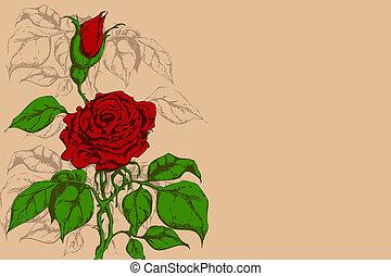 fiore, retro