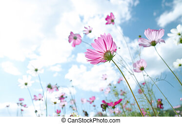 fiore selvaggio