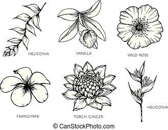 fiore, set, illustration., collezione, disegno