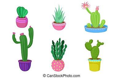 fiore, set, pots., vettore, illustration., cactus