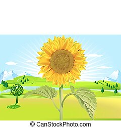 fiore sole, in, estate