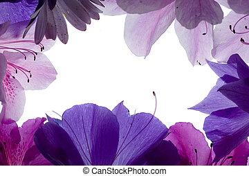 fiore, sopra, fondo, viola, bianco, cornice
