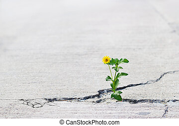 fiore, testo, crepa, giallo, fuoco, strada, vuoto, crescente, morbido