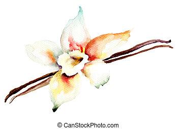 fiore, vaniglia, baccelli