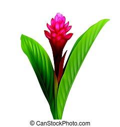 fiore, zenzero rosso