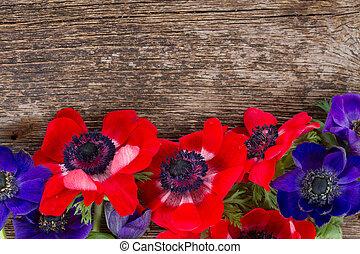 fiori, anemone
