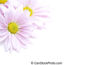 fiori, angolo