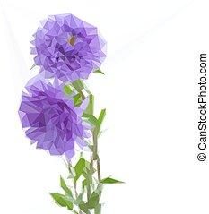 fiori, aster, tre, lilla