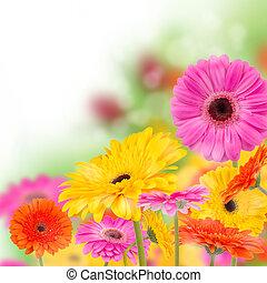 fiori, azzurramento