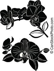 fiori bianchi, isolato, fondo, orchidea