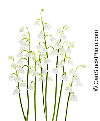 fiori bianchi, lily-of-the-valley