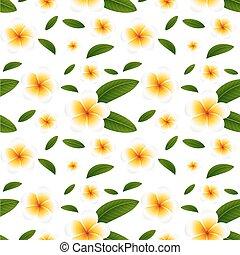 fiori bianchi, seamless, fondo, plumeria