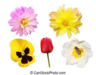 fiori bianchi, set