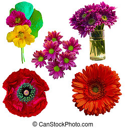 fiori, bianco, set, isolato, fondo