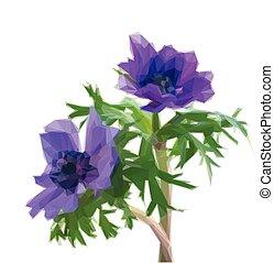 fiori blu, anemone