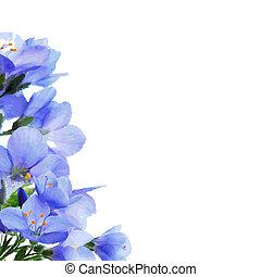 fiori blu, bordo